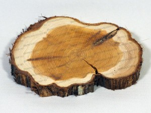 Спилы дерева – можжевельник